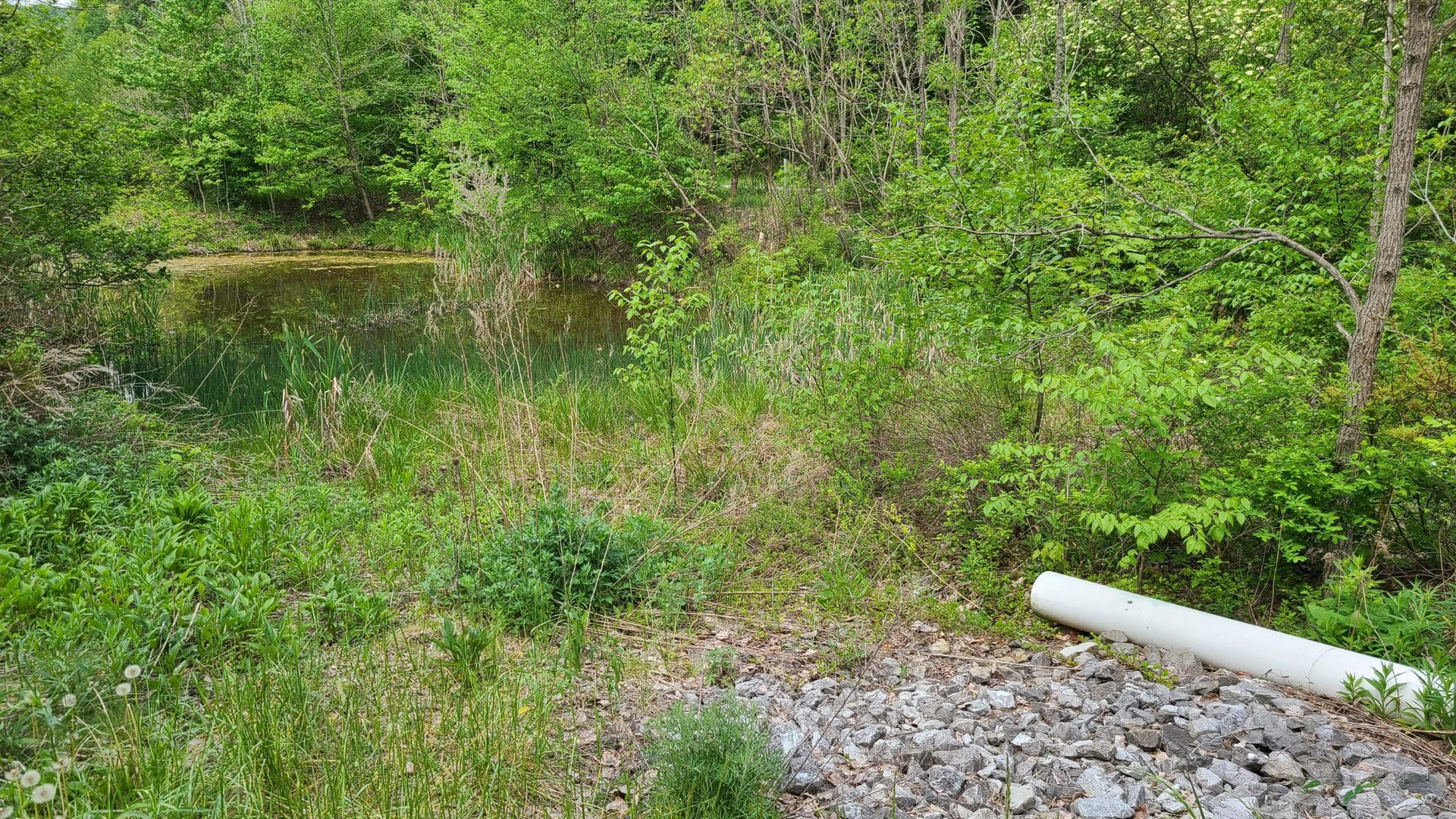 A PVC pipe is ready to drain mine discharge into a sickly-looking pond.