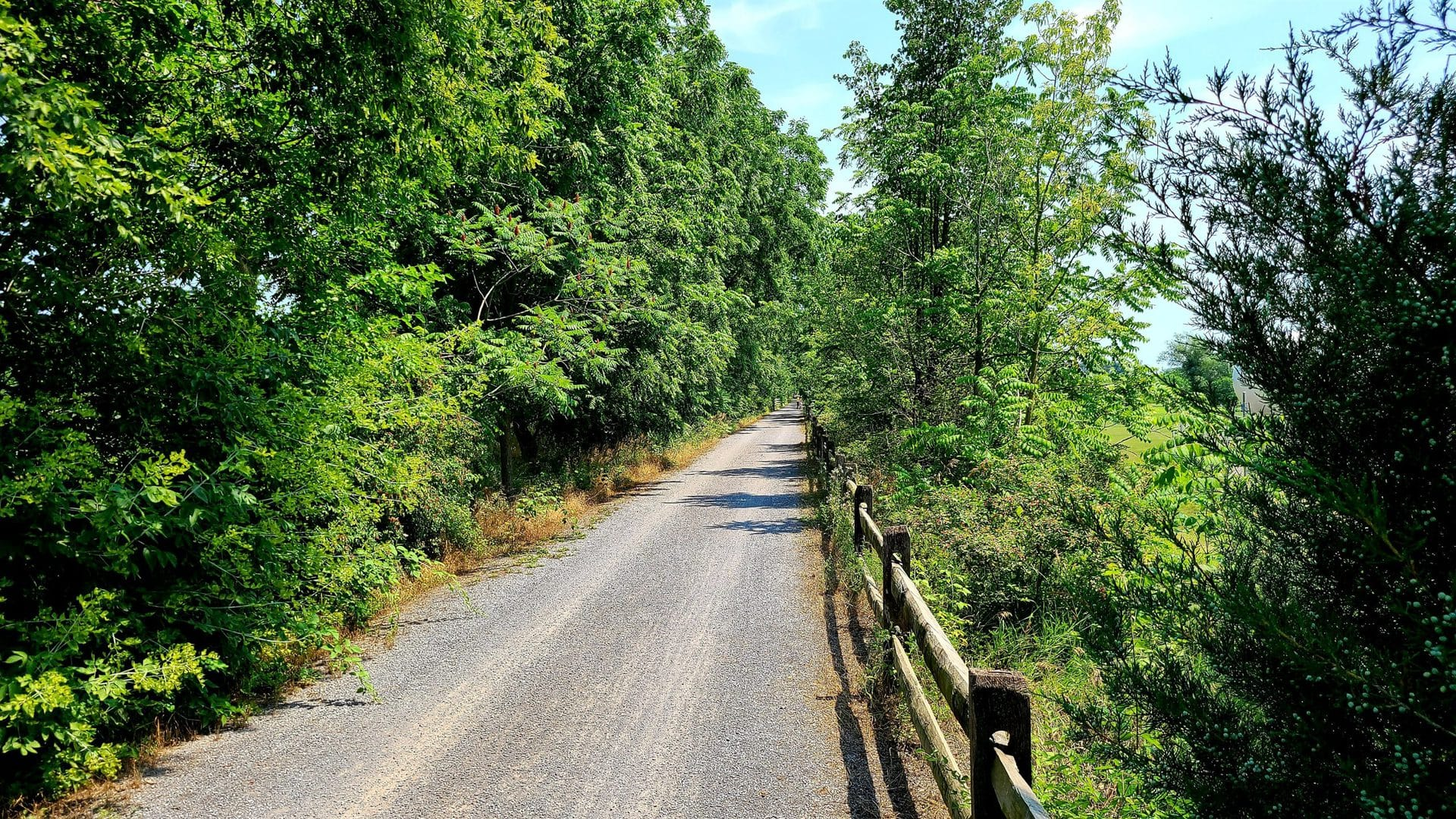 The rail trail runs through a thick patch of trees. An old wooden fence runs along the right hand side of the trail. The trail surface is finely crushed gravel.