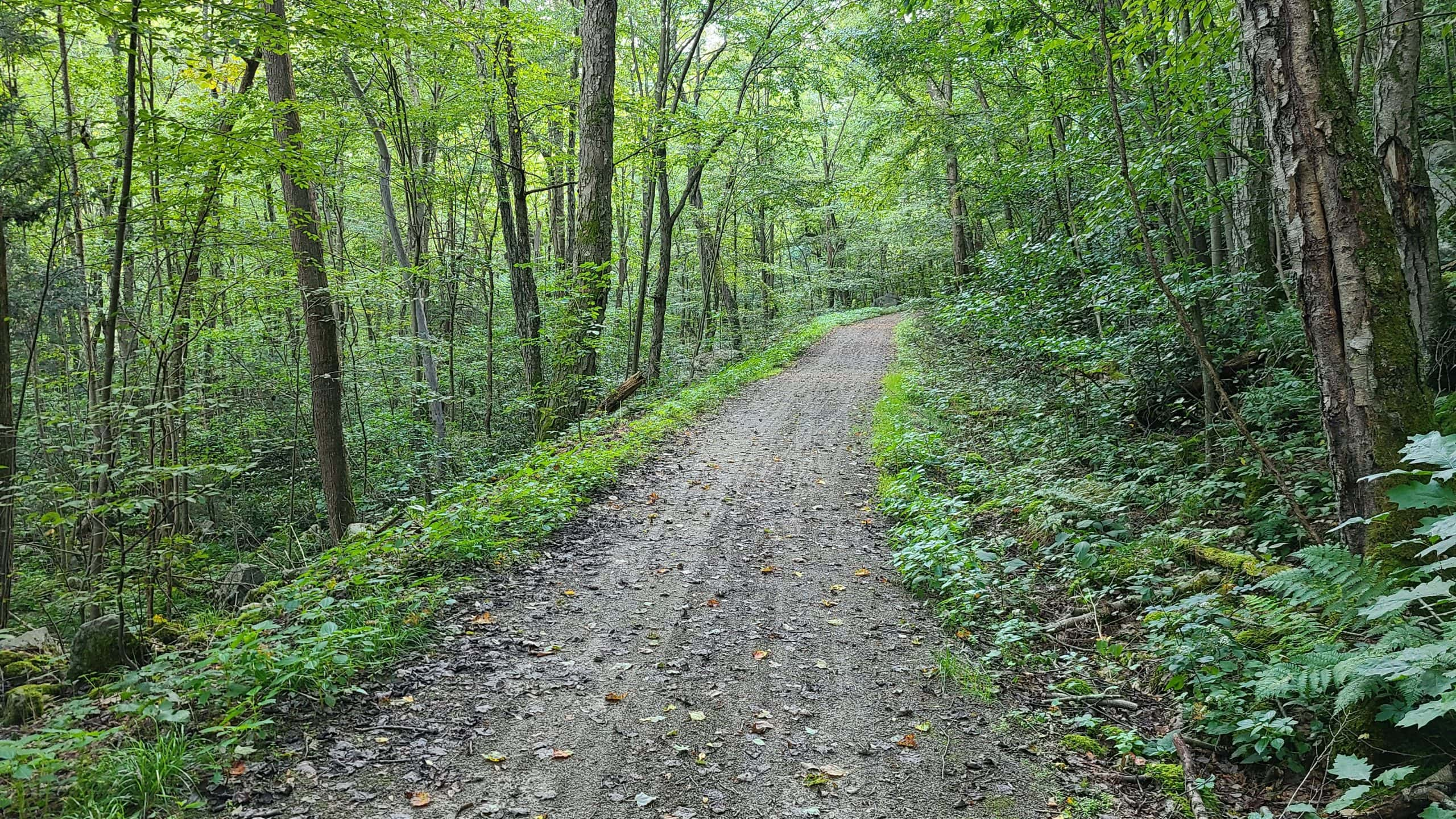 A narrower dirt trail winds through thick forest.