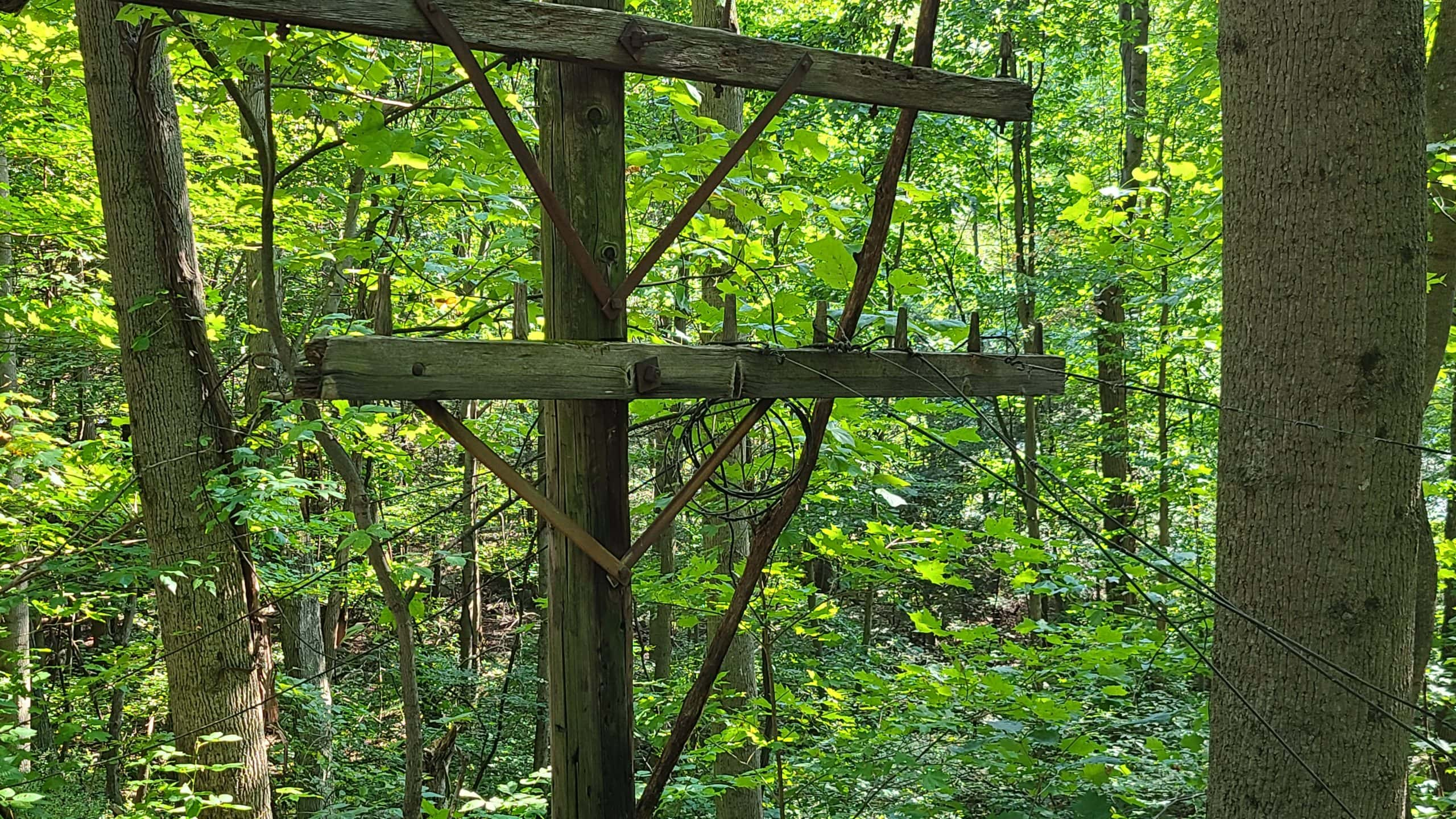 A telegraph pole in the woods. Cables are still attached. One of the posts is broken.