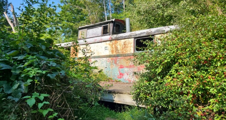 A rusty caboose in a forest is slowly being overtaken by brush